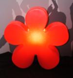 Shining Flower rot